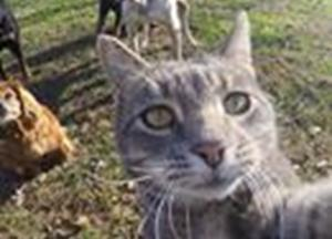 Nedeljska doza smeha: mačka, ki obvlada selfije :)